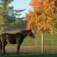 Sunrise Horses